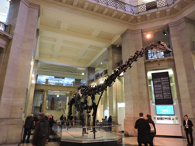 Dippy the Dinosaur in the atrium of the National Museum Cardiff