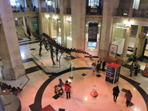 Dippy the Dino in the entrance hall at the National Museum Cardiff